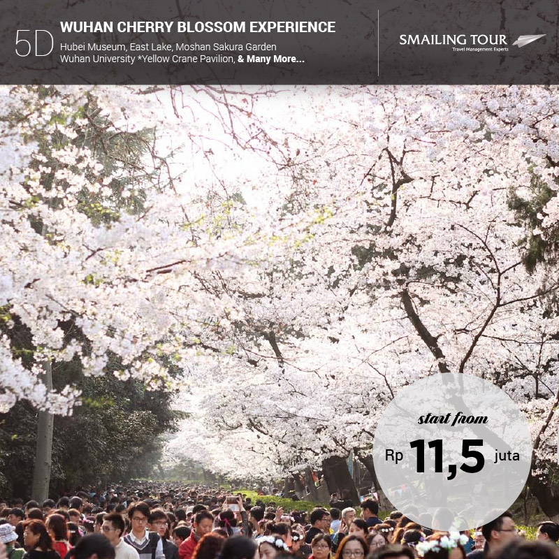 5d-wuhan-cherry-blossom-experience2